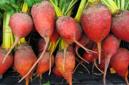 beets-944596_960_720