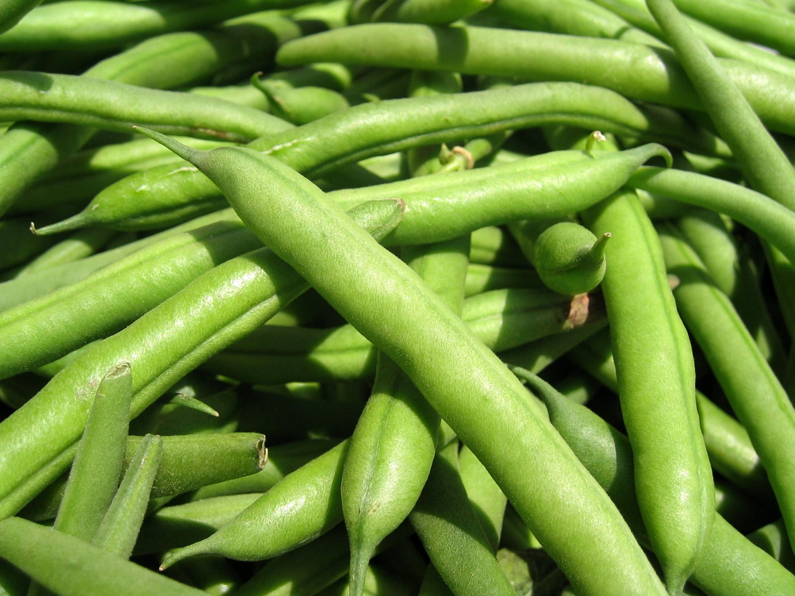 Beans: calorie and healthy properties 38